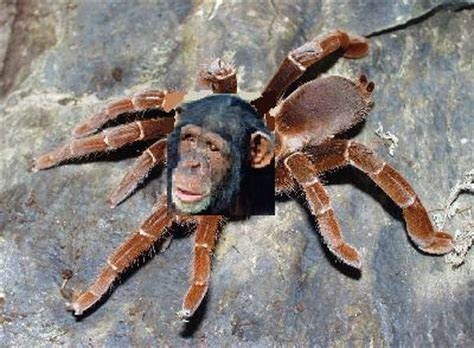Spider - Uncyclopedia, the content-free encyclopedia