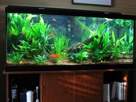 Home Aquarium Design Ideas by Fish Tank Ideas Healthy Fish Tank Decorations