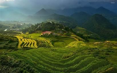 Rice Vietnam Terraces Nature Field Terrace