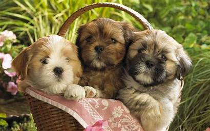 Cutest Puppy Contest Cuteomatic Cute Puppies Enlarge