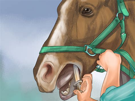 How To Cure Colic In Horses And Ponies With Pictures