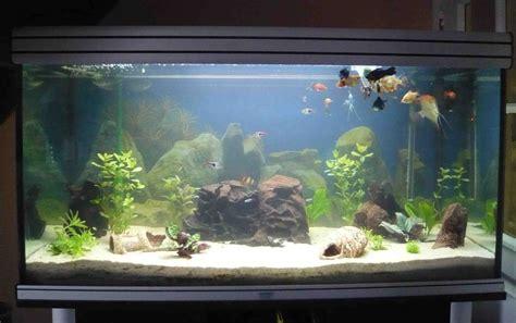 quel aquarium pour un poisson 28 images quel type de poisson choisir pour un aquarium