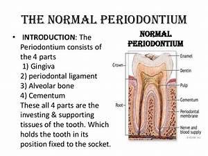 PDL, Cementum & Alveolar Bone