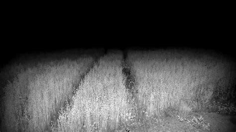 black fields horror monochrome nature wallpaper
