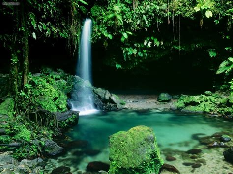 bureau valley martinique nature emerald pool morne trois pitons national park