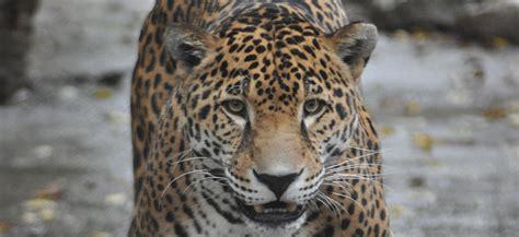 south america louisville zoo