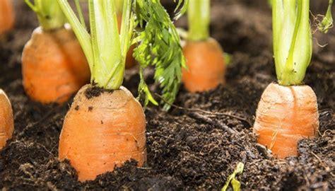 Leckeres Gemüse Aus Dem Eigenen Garten