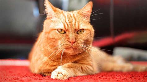 stop pets  peeing  carpets petsblogs