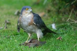 Identify Birds of Prey