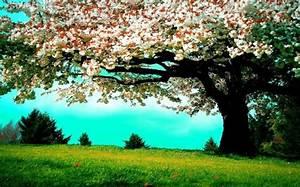 Le plus beau paysage fleuri voyez les meilleures images for Good couleurs chaudes et froides 3 le plus beau paysage fleuri voyez les meilleures images