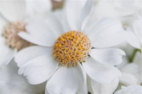 Bouquet di fiori gialli con peluche e biglietto. Petali bianchi di fiore con centro giallo | Foto Gratis