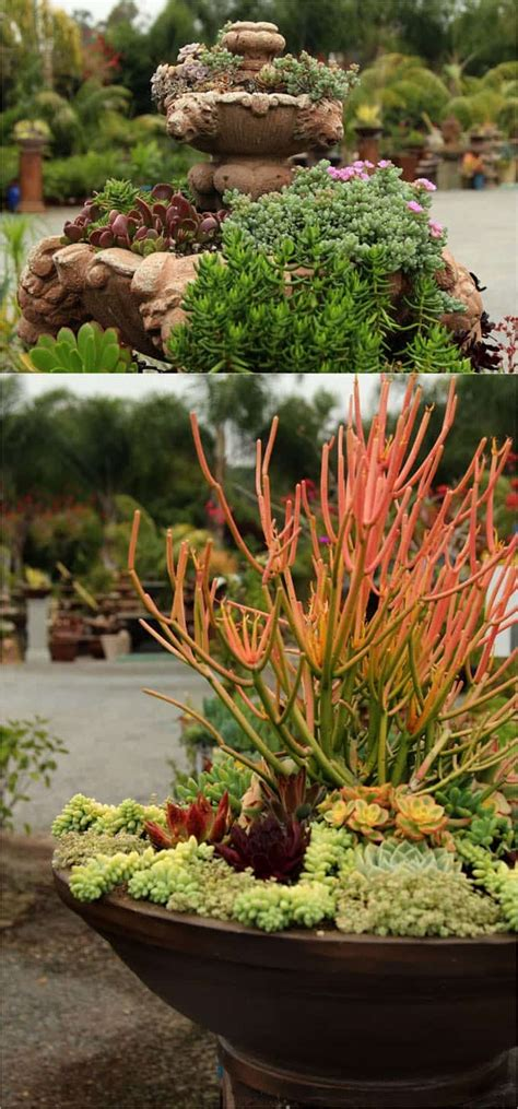 beautiful succulent gardens how to plant beautiful succulent gardens in 5 easy steps succulents garden succulent care and