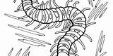 Centipede Coloring 88kb 330px Drawings sketch template