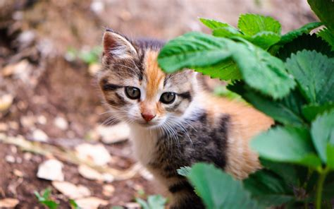 Animals Wallpapers For Windows 7 - best animals hd wallpapers for windows 7 10 8