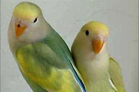 pin birds sale on pinterest