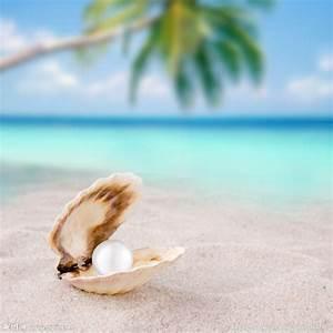 沙滩 贝壳 珍珠摄影图__海洋生物_生物世界_摄影图库_昵图网nipic.com