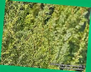 От гипертонии травы и ягоды