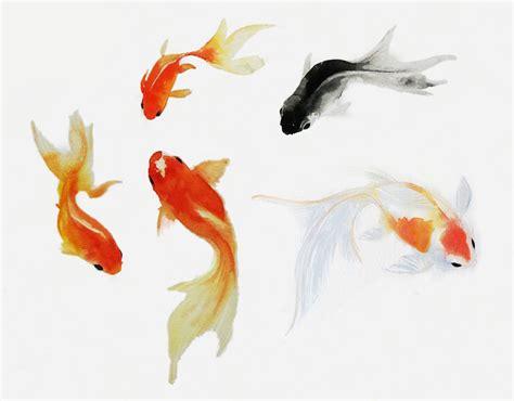 pagani drawing watercolor fish