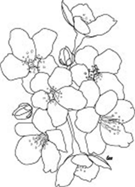 Adult Coloring Books & Designs: Japanese Cherry Blossoms