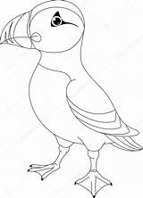 Puffin Coloring Kleurplaat Puffins Atlantic Atlantische Clip Colouring Papegaaiduiker Nest Frailecillo Stockillustratie Maskonur Vogel Illustrations Template Depositphotos Colorear Sketch Zwyczajny sketch template