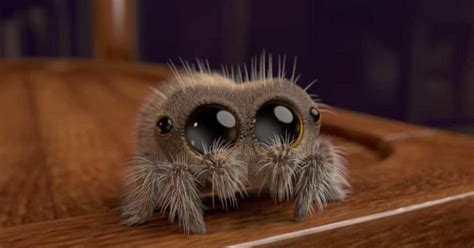This Is Lucas, The Most Adorable Spider, That'll Instantly