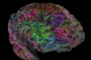 Scientists Map Brain U2019s Thesaurus To Help Decode Inner