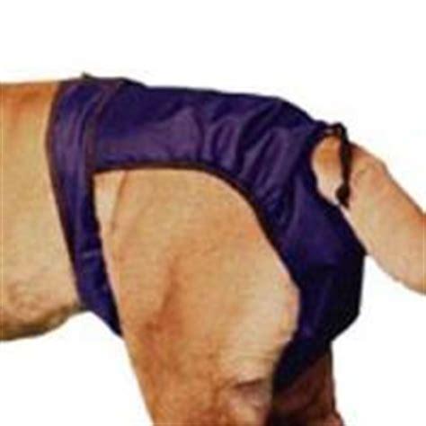 inkontinenz bei hunden wir helfen mit hundewindeln