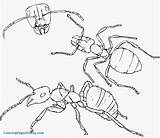 Ant Coloring Drawing Draw Pages Hill Ants Insects Colony Pencil Step Marching Septiembre Simple Clipart Printable Drawings Anthill Cartoon Getcolorings sketch template