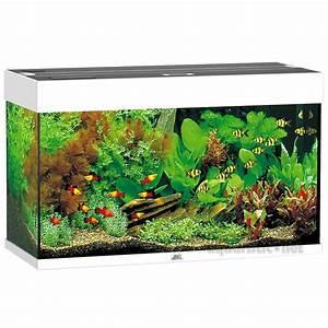 Die Besten Aquarien : besten wohnzimmer aquarien ~ Lizthompson.info Haus und Dekorationen