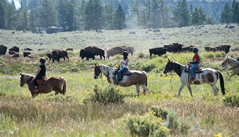 horseback yellowstone riding horse ride park national western things activities activity summer mountains region adventures ys kid rocky yellowstonepark