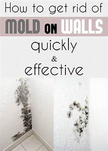 how to get rid of mold on walls quickly and effectively With how to get rid of mold on walls in bathroom