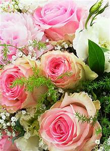 Floristik - Blumenstr U00e4u U00dfe