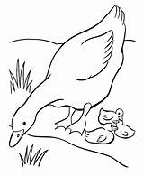 Goose Coloring Pages Farm Ducks Sheets Baby Printable Mother Duck Animal Easter Sheet Babies Embroidery Geese Fun Colouring Animals Drawings sketch template