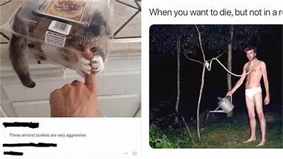 Reddit Memes Funny Found Funniest Whatsapp Thing
