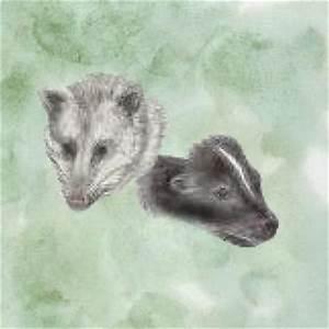 Virginia Living Museum   Skunk and Opossum
