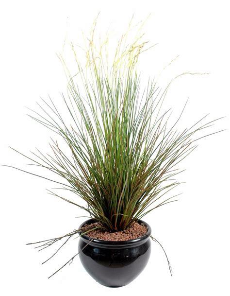 yucca exterieur resistant au gel plante exterieur resistant au gel 28 images yucca agavac 233 es la palmeraie p 233 pini 232
