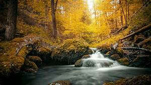 Stream, On, Yellow, Foliage, Covered, Rock, During, Daytime, Hd, Nature, Wallpapers