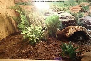 Pflanzen Terrarium Einrichten : schildkr ten terrarium villa amanda der schildkr ten blog ~ Watch28wear.com Haus und Dekorationen