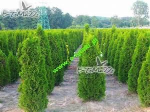 Thuja Smaragd Wachstum : thuja smaragd 160 cm unsere transport e heckenpflanzen ~ Michelbontemps.com Haus und Dekorationen