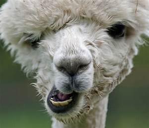 Are you even a llama, bro?