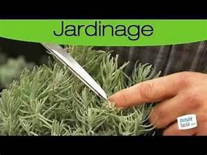 Quand Planter Lavande Dans Jardin : conseil planter de la lavande dans son jardin youtube ~ Dode.kayakingforconservation.com Idées de Décoration