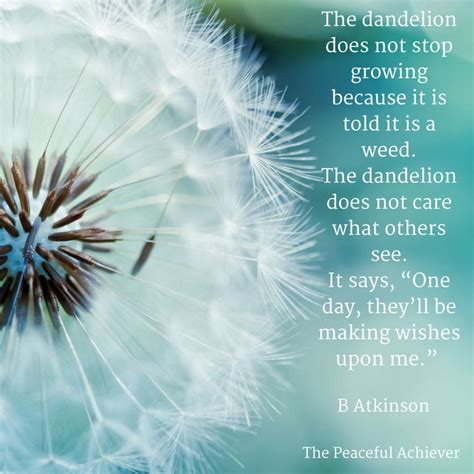 best 25 dandelion quotes ideas on flower
