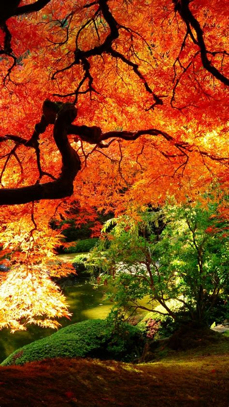 Free download wallpaper hd japanese garden trees autumn ...