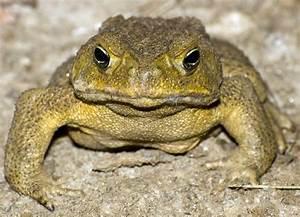Pflanzen Gegen Spinnen : aga kr te australien killing tours gegen die cane toad pest ~ Lizthompson.info Haus und Dekorationen