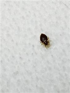 bed bug picture of drury inn suites orlando orlando With bed bugs orlando