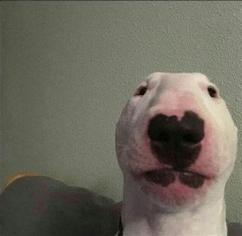 whats    picture   dog outoftheloop