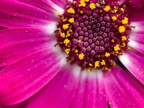 macro photography  plants flowers