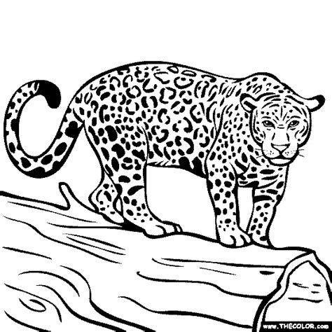 jungle animals  coloring pages page