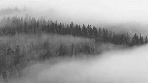 Fog, Gifs