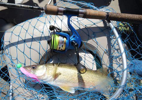 walleye reel  buyers guide pro walleye